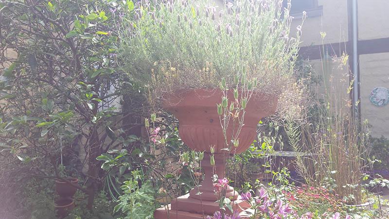 lavenderurn